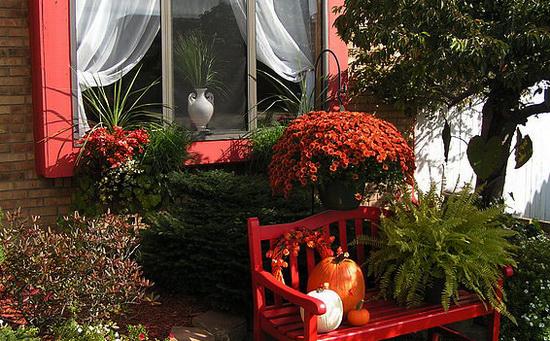 тыква во дворе