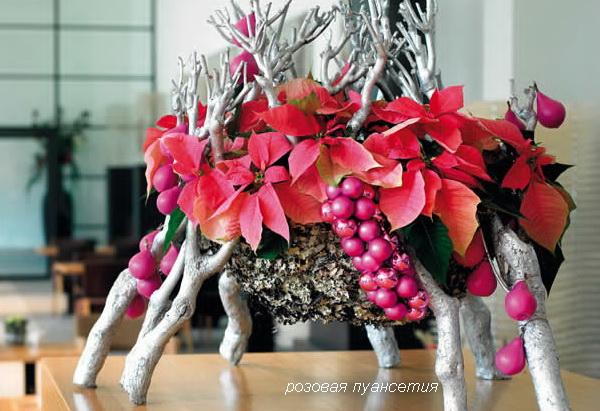 розовая пуансетия
