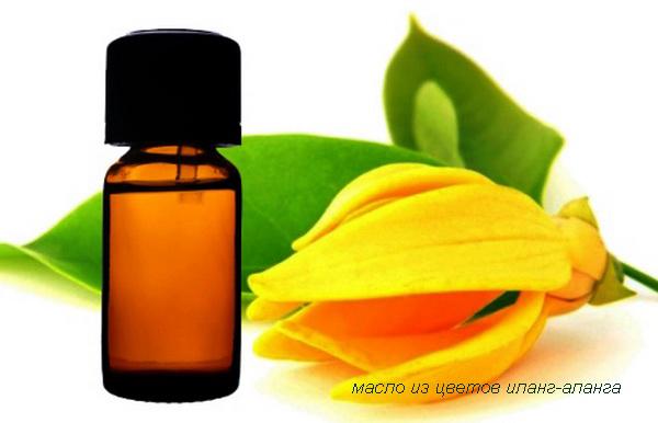 масло из цветов иланг-иланга
