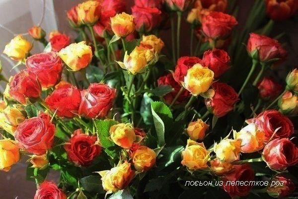 лосьон из лепестков роз