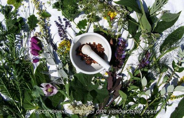 лекарственные травы для увядающей кожи