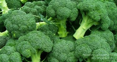Брокколи — вкусная и полезная, особенно для женщин