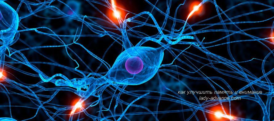 Как улучшить память и внимание без лекарственных препаратов