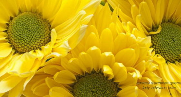 О чем символизируют цветы желтого цвета?