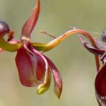 Завораживающие орхидеи. Фото цветов и их любовные интриги