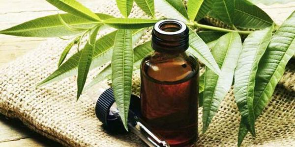 масло чайного дерева против волдырей