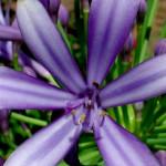Самые красивые растения с фиолетовыми цветами