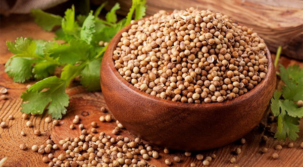 кинза и семена кориандра