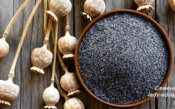 Чем полезны семена мака?