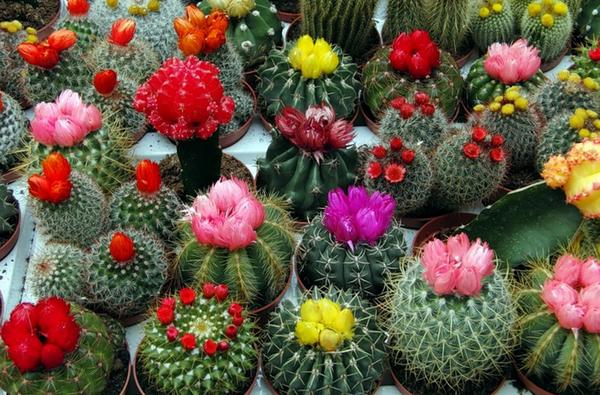 суккуленты с цветами